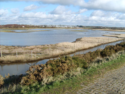Lymington Salt Marshes and the Solent way